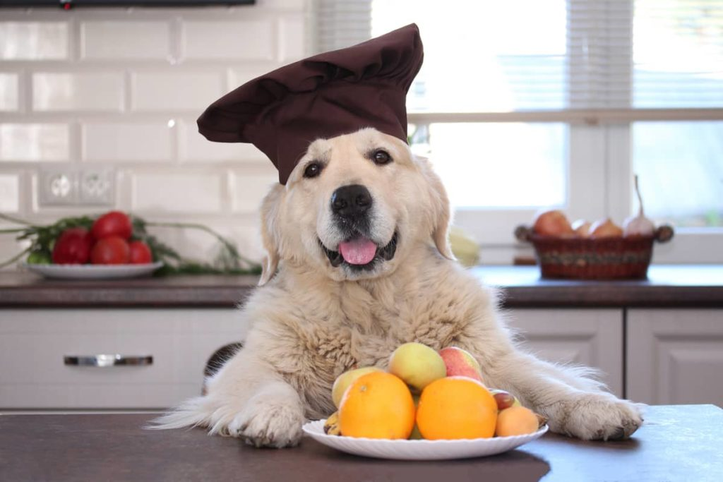 the chef dog