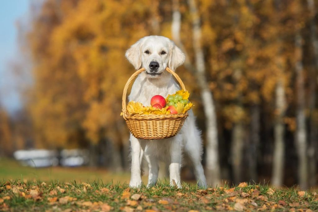 dog with fruit basket