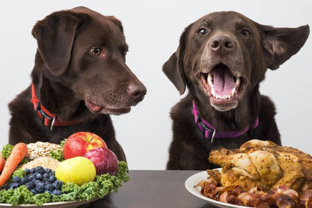 fruits dogs can eat safely