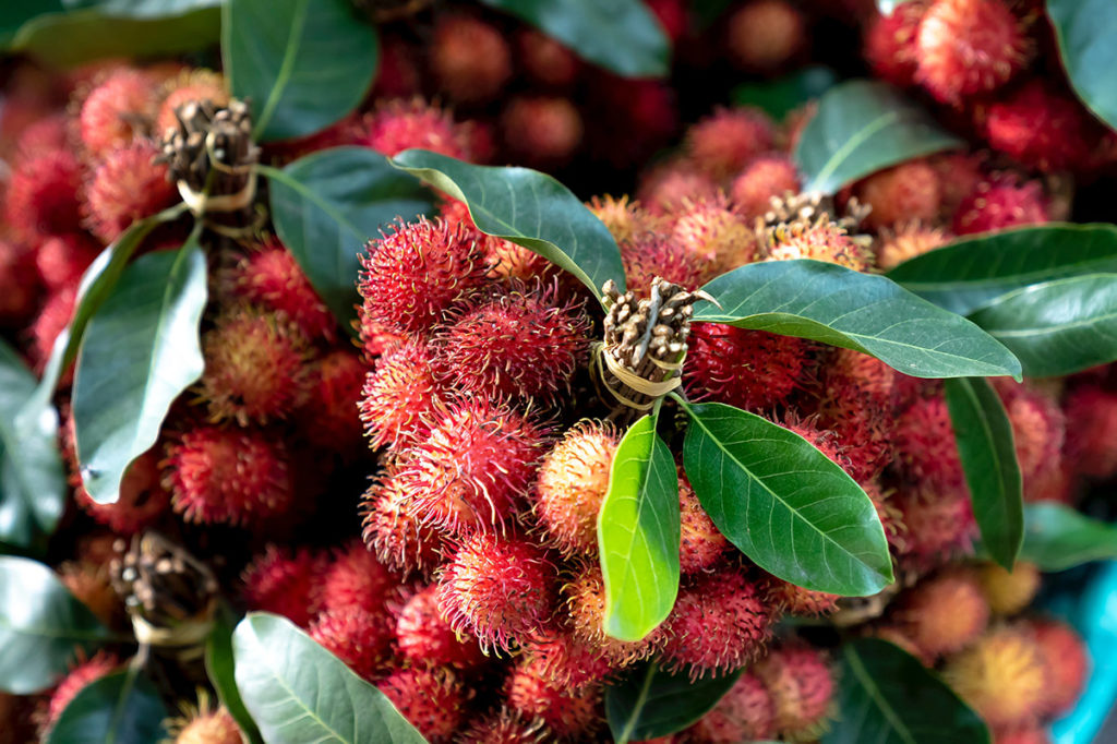 Rambutan Fruit: The Crazy Looking Red Hairy Fruit